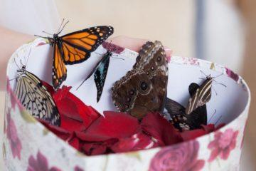 Коробка с бабочками в подарок: идеи по оформлению и выбору