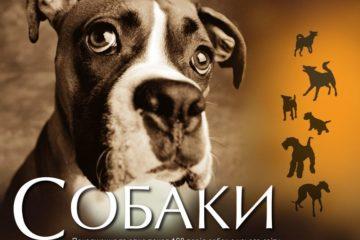 Собака в подарок. Можно ли дарить щенков? - Sobaky.Info