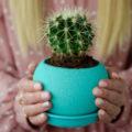 Подарить кактус и сказать оригинальное пожелание. Можно ли дарить кактус девушке? Можно ли дарить кактус