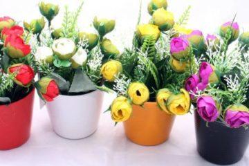 Какой комнатный цветок, растение подарить со смыслом — 13 идей