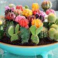 Можно ли дарить кактус на день рождения: значение приметы