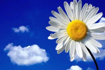 Цветы для девушки, женщины в подарок: какой букет лучше подарить в знак любви, как выбрать