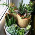Идея оригинального подарка мужчине – кактус!   Funny Gifts